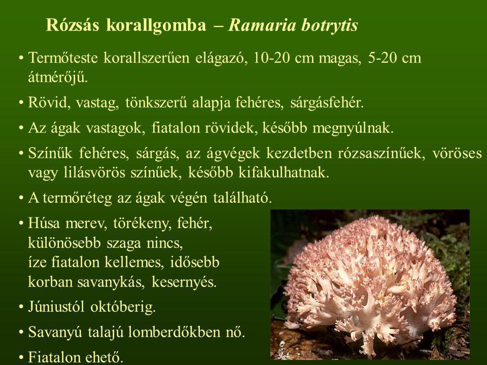 Rózsás korallgomba – Ramaria botrytis
