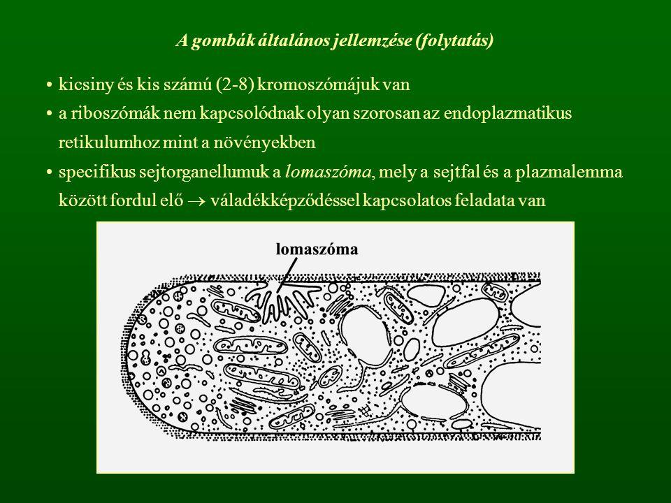 A gombák általános jellemzése (folytatás)