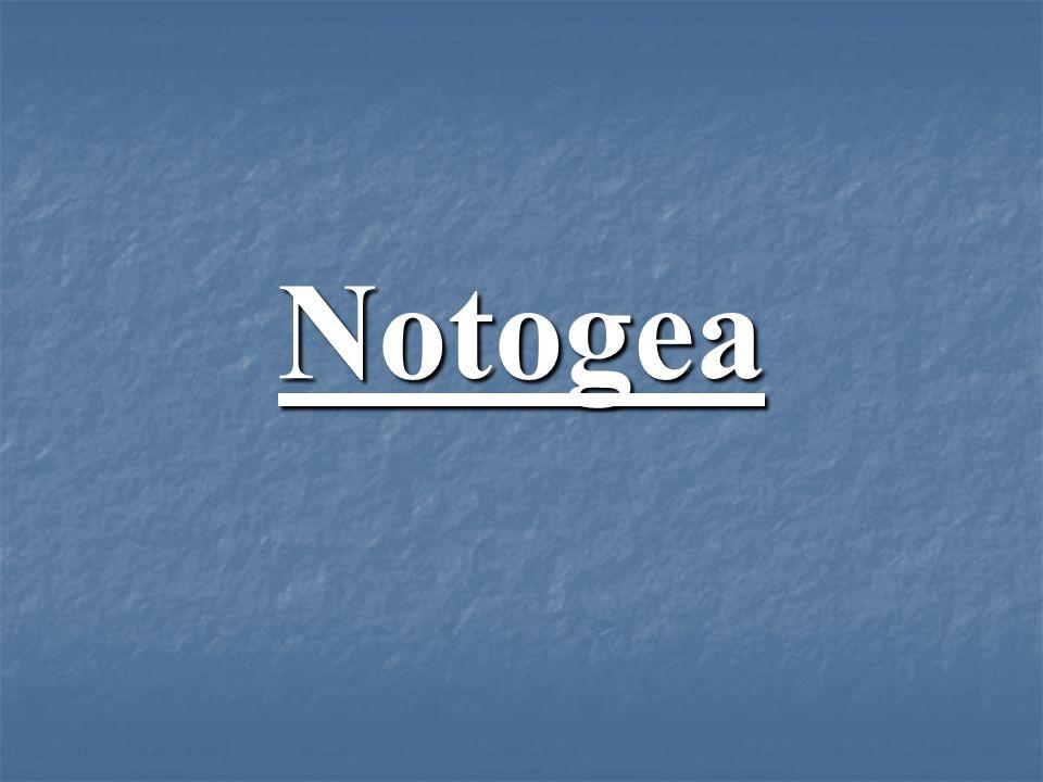 Notogea