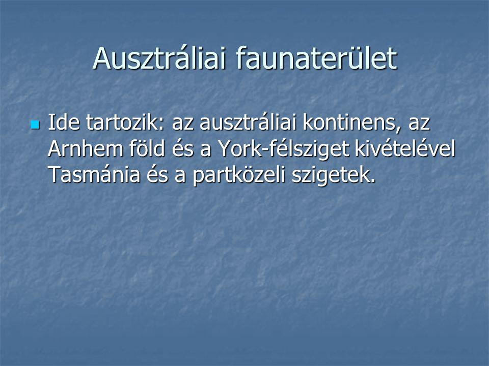 Ausztráliai faunaterület