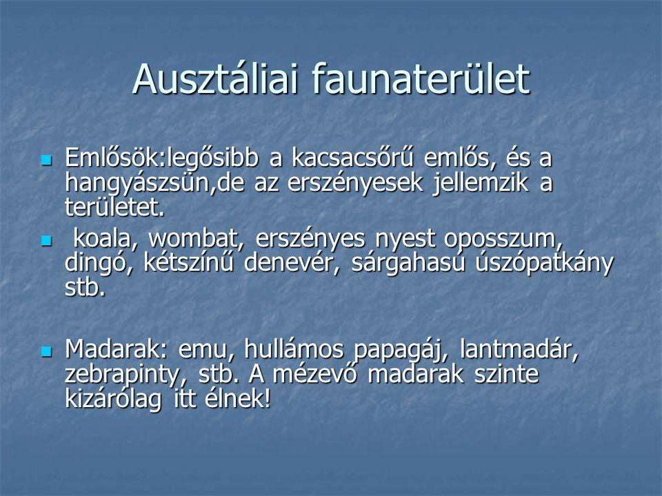 Ausztáliai faunaterület