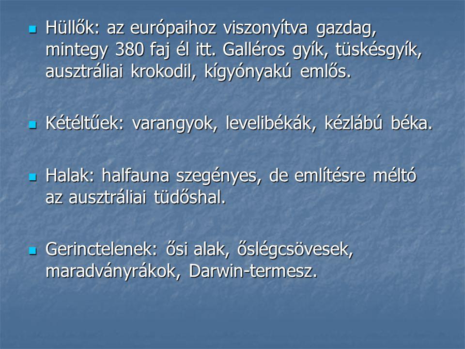 Hüllők: az európaihoz viszonyítva gazdag, mintegy 380 faj él itt