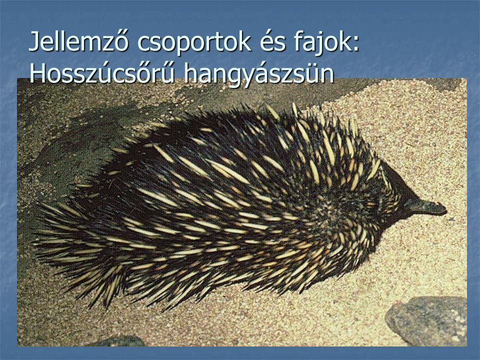 Jellemző csoportok és fajok: Hosszúcsőrű hangyászsün