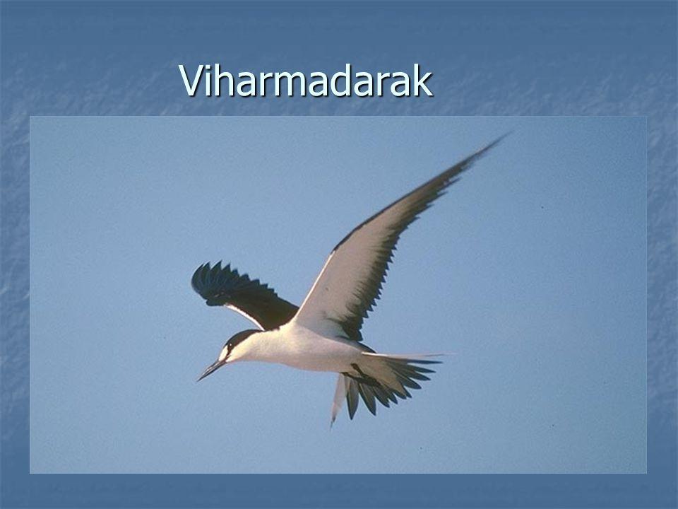Viharmadarak
