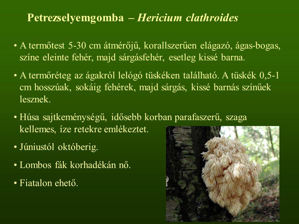 Petrezselyemgomba – Hericium clathroides