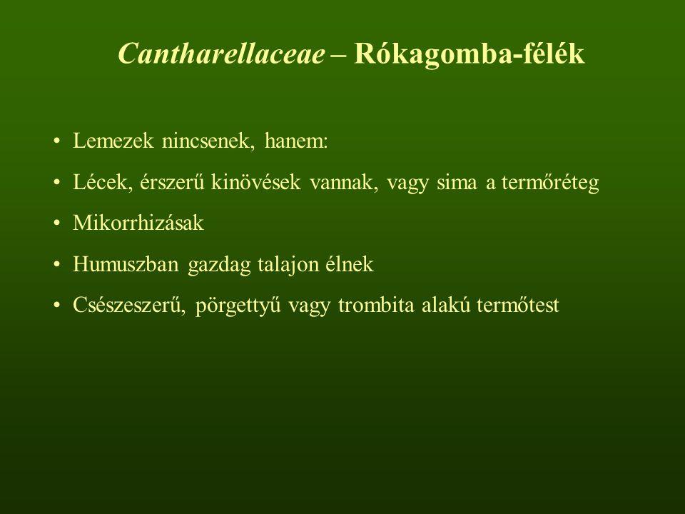 Cantharellaceae – Rókagomba-félék