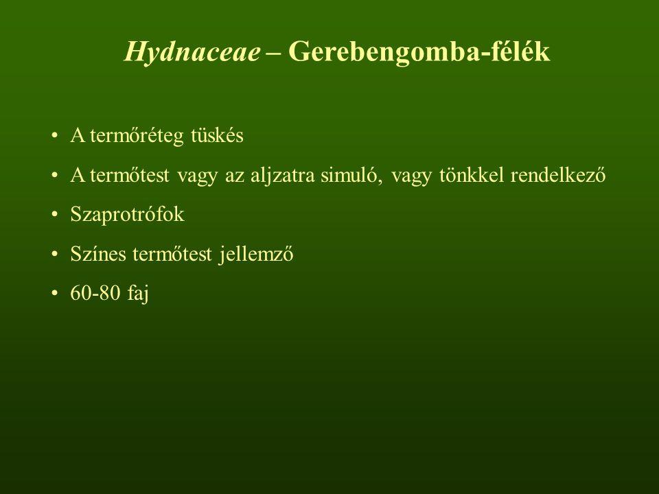 Hydnaceae – Gerebengomba-félék