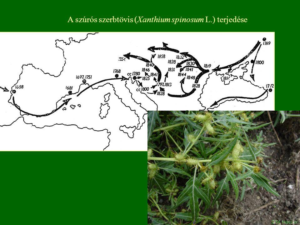 A szúrós szerbtövis (Xanthium spinosum L.) terjedése