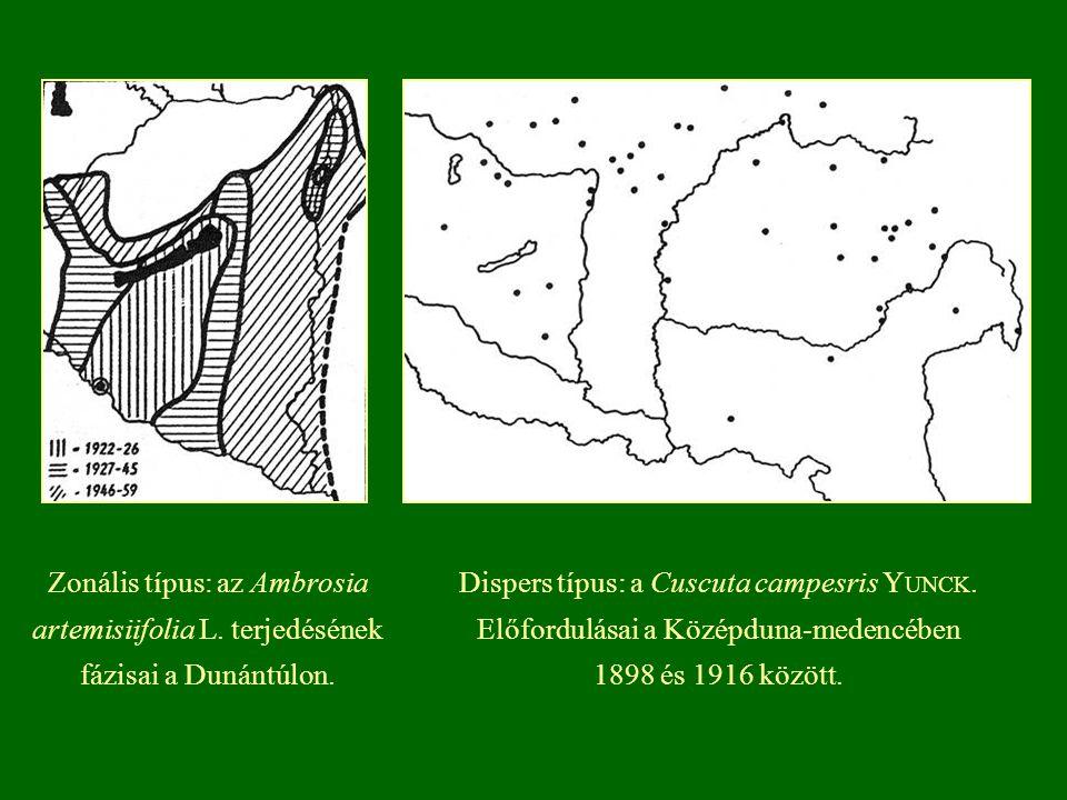 Zonális típus: az Ambrosia artemisiifolia L