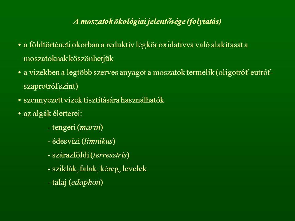 A moszatok ökológiai jelentősége (folytatás)