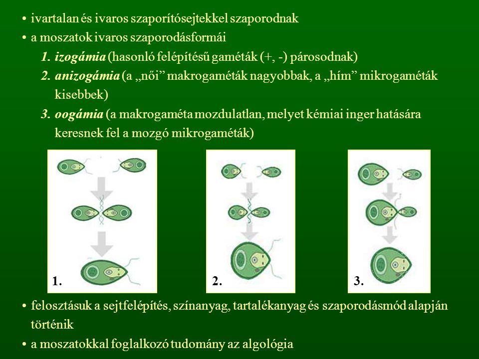 ivartalan és ivaros szaporítósejtekkel szaporodnak