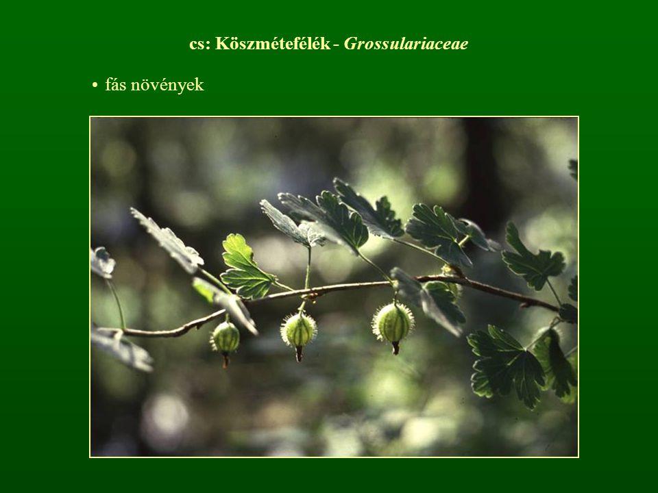 cs: Köszmétefélék - Grossulariaceae
