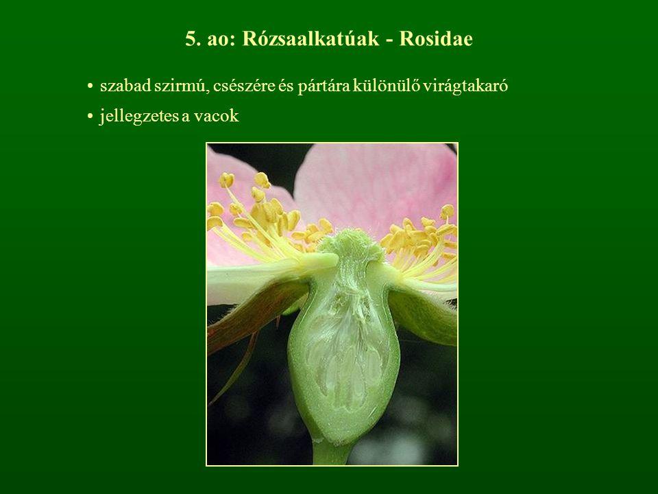 5. ao: Rózsaalkatúak - Rosidae