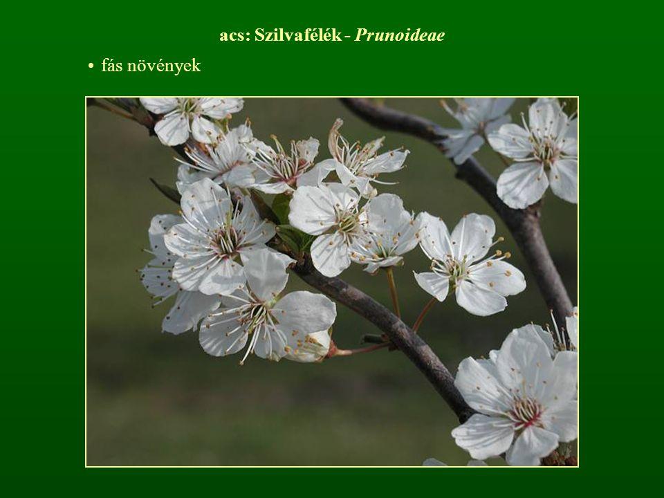 acs: Szilvafélék - Prunoideae