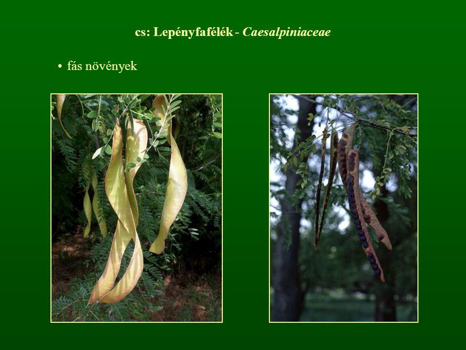 cs: Lepényfafélék - Caesalpiniaceae