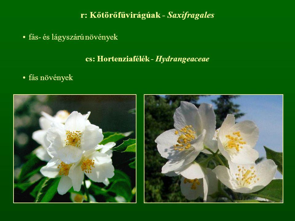 r: Kőtörőfűvirágúak - Saxifragales