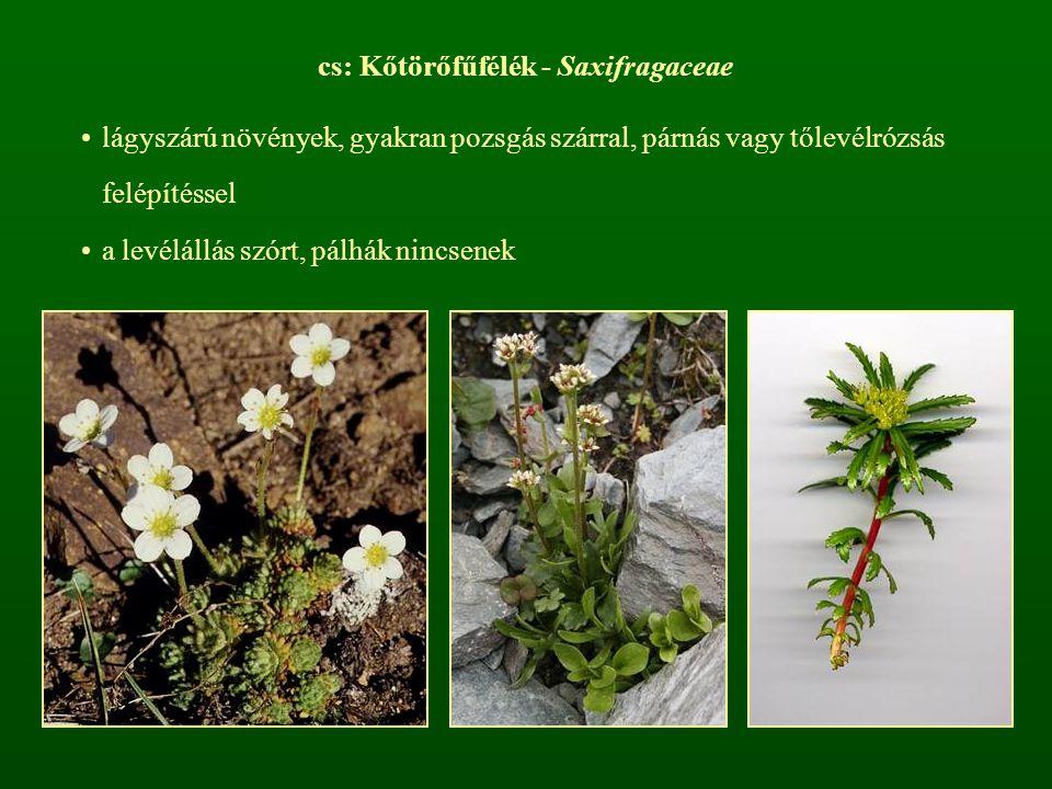 cs: Kőtörőfűfélék - Saxifragaceae