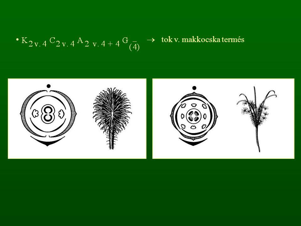  tok v. makkocska termés