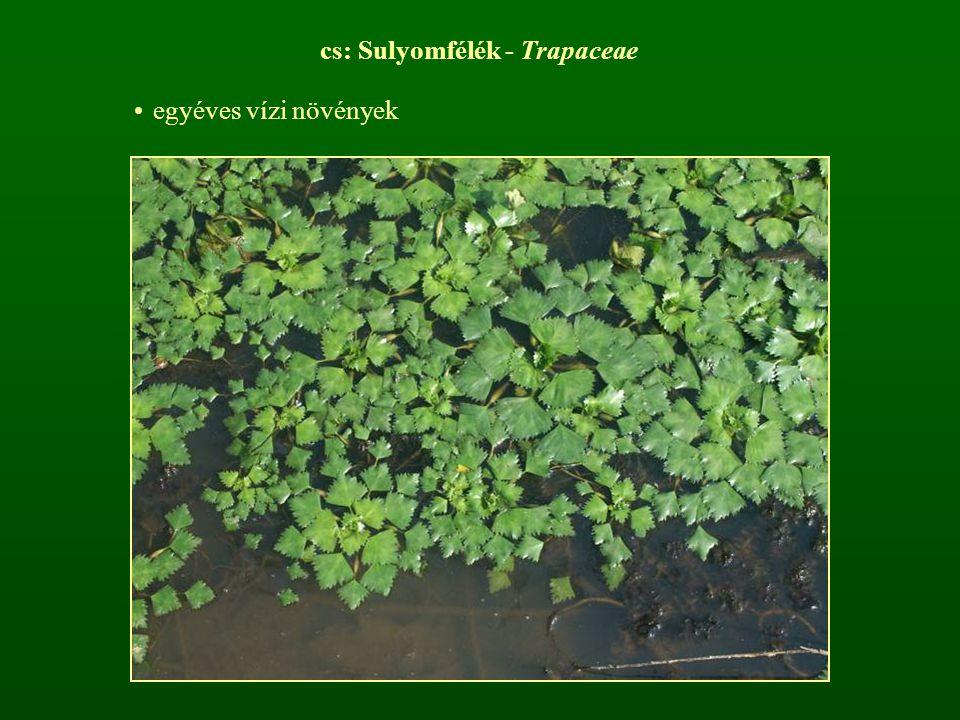 cs: Sulyomfélék - Trapaceae
