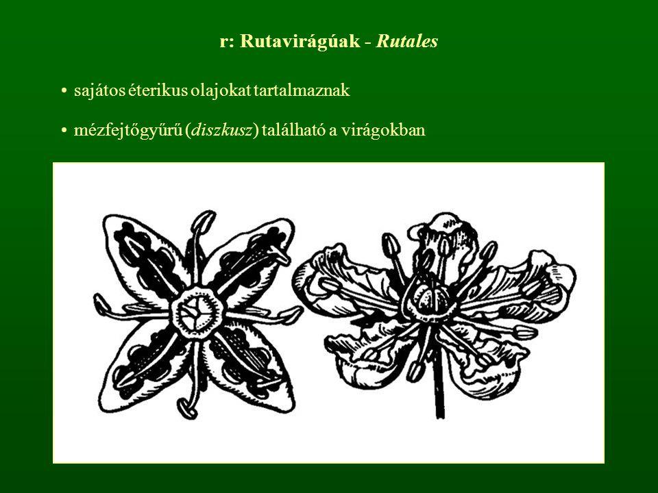 r: Rutavirágúak - Rutales