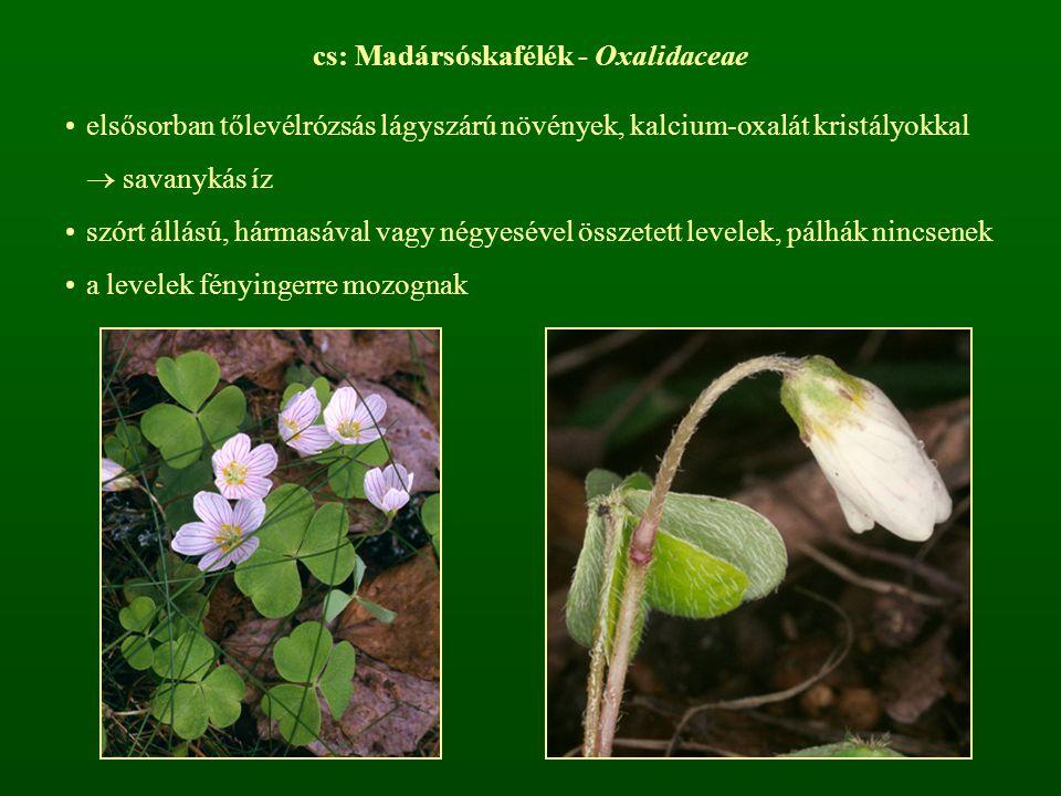 cs: Madársóskafélék - Oxalidaceae