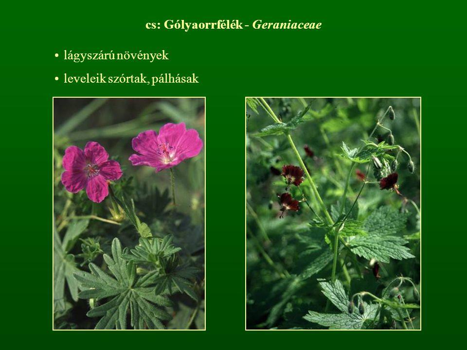 cs: Gólyaorrfélék - Geraniaceae