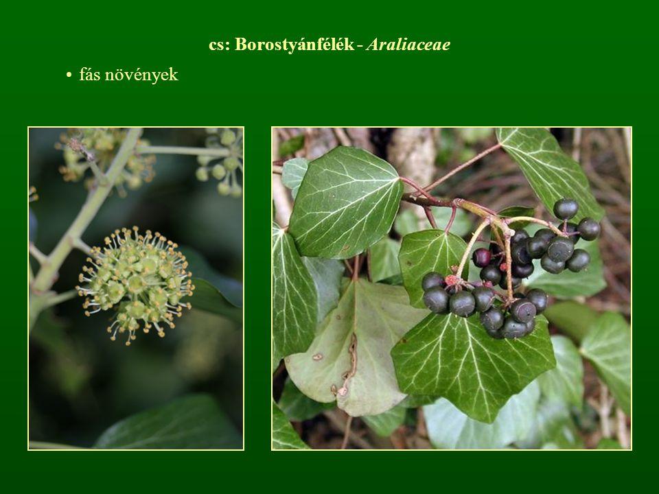 cs: Borostyánfélék - Araliaceae