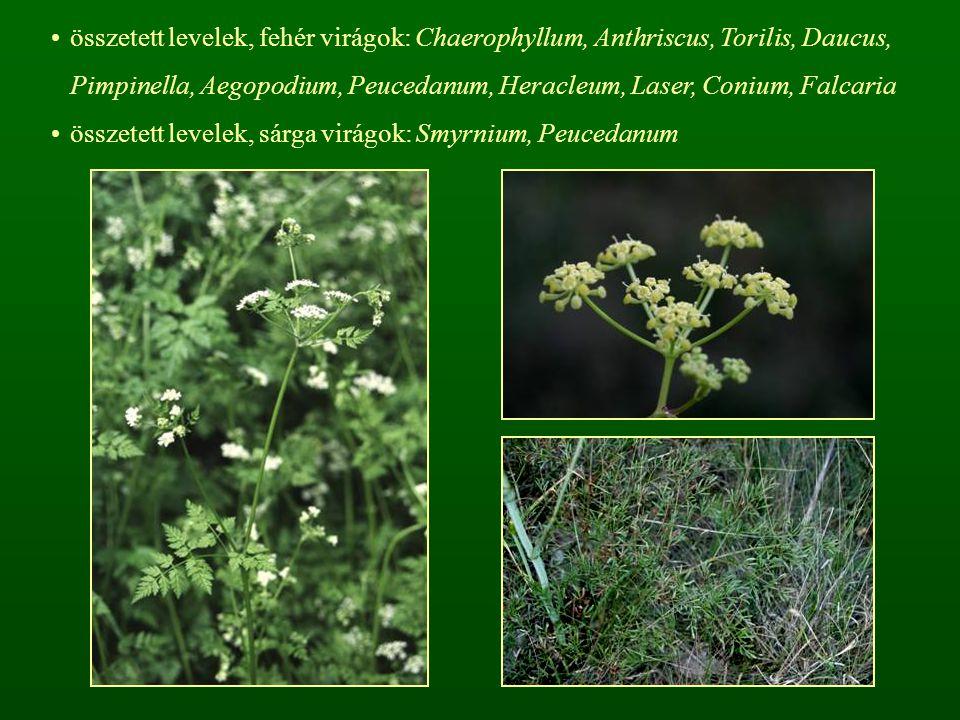 összetett levelek, fehér virágok: Chaerophyllum, Anthriscus, Torilis, Daucus, Pimpinella, Aegopodium, Peucedanum, Heracleum, Laser, Conium, Falcaria