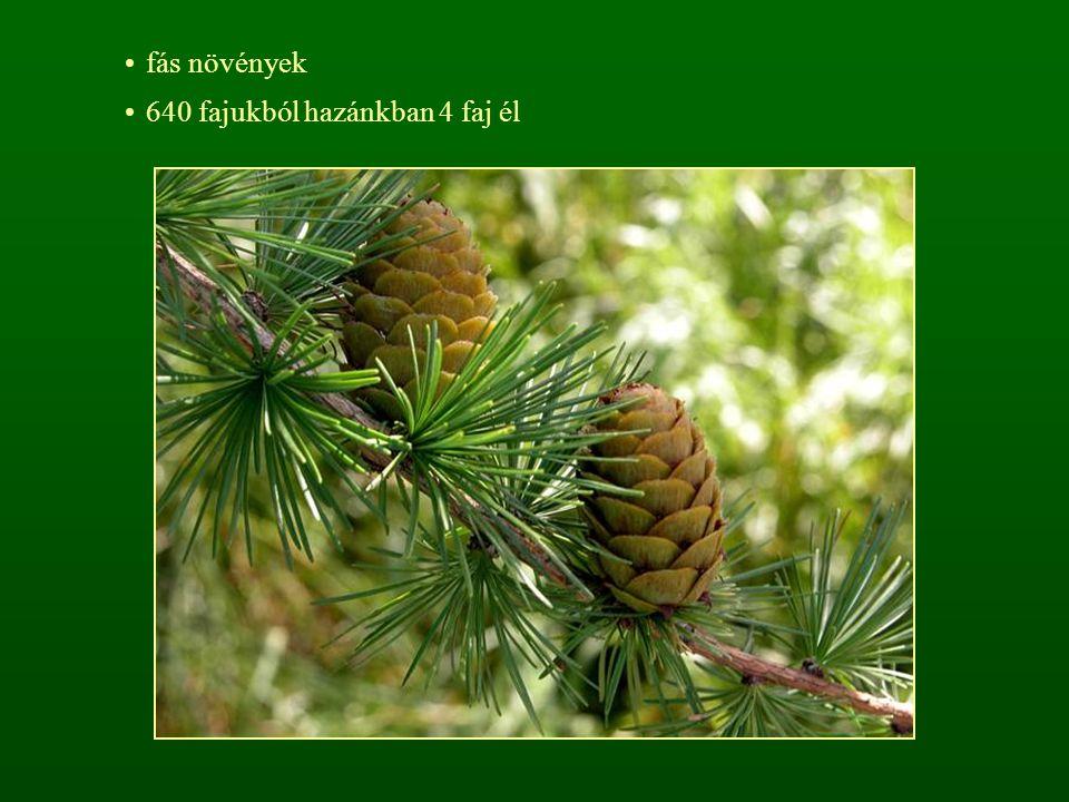 fás növények 640 fajukból hazánkban 4 faj él