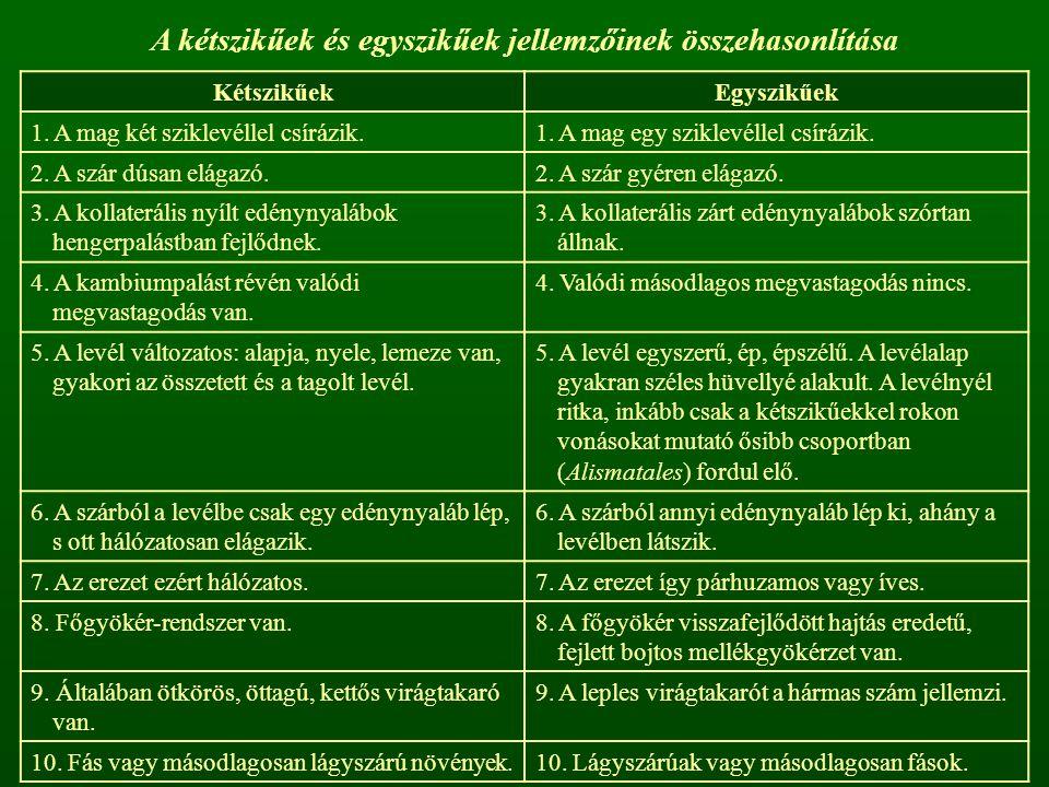 A kétszikűek és egyszikűek jellemzőinek összehasonlítása