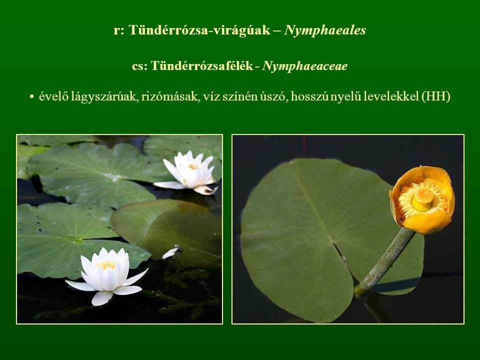 r: Tündérrózsa-virágúak – Nymphaeales