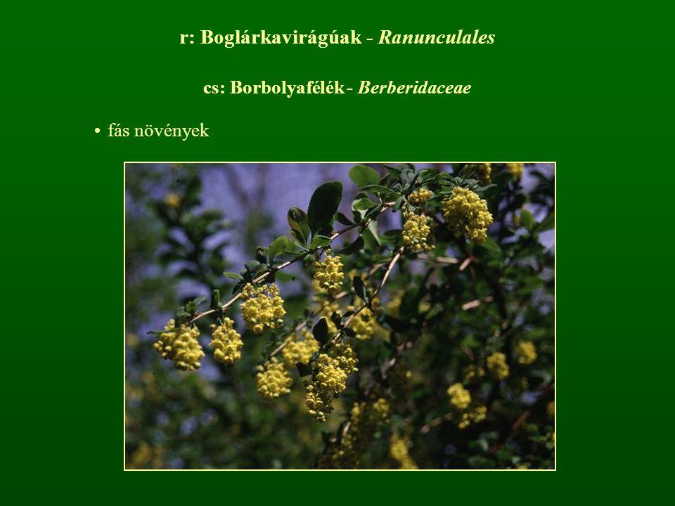 r: Boglárkavirágúak - Ranunculales