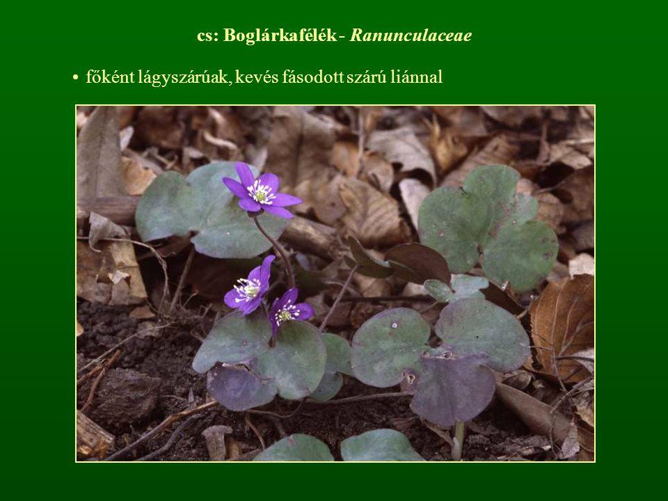 cs: Boglárkafélék - Ranunculaceae