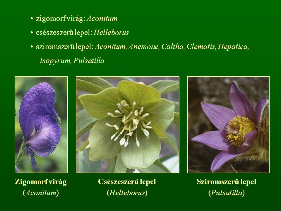 zigomorf virág: Aconitum