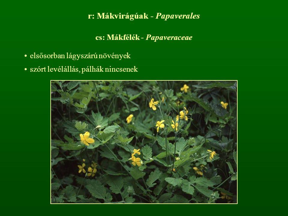r: Mákvirágúak - Papaverales