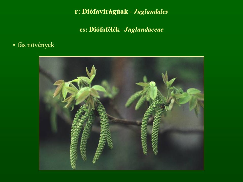 r: Diófavirágúak - Juglandales
