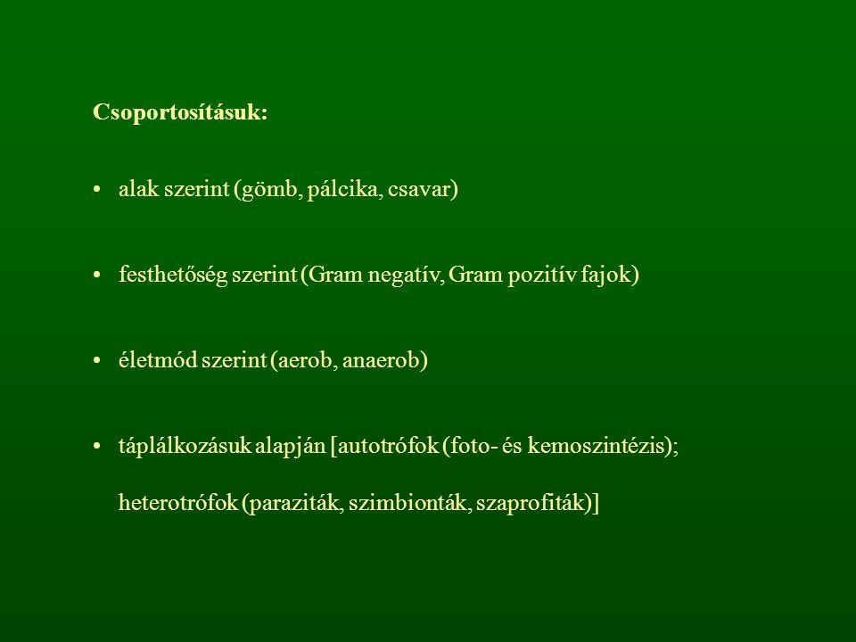 Csoportosításuk: alak szerint (gömb, pálcika, csavar) festhetőség szerint (Gram negatív, Gram pozitív fajok)