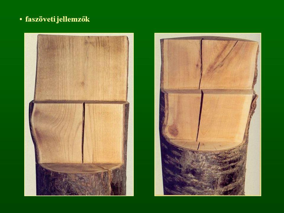 faszöveti jellemzők
