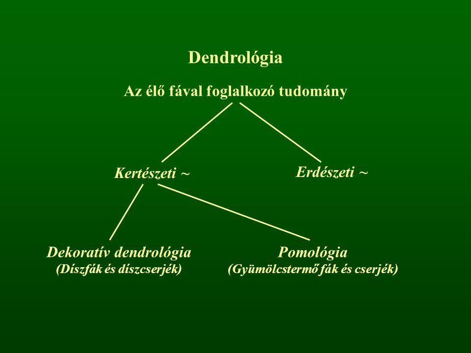 Dendrológia Az élő fával foglalkozó tudomány Kertészeti ~ Erdészeti ~