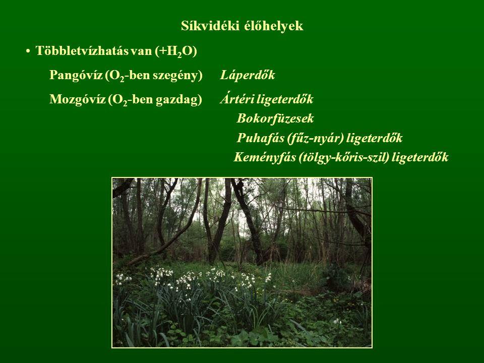Síkvidéki élőhelyek Többletvízhatás van (+H2O)