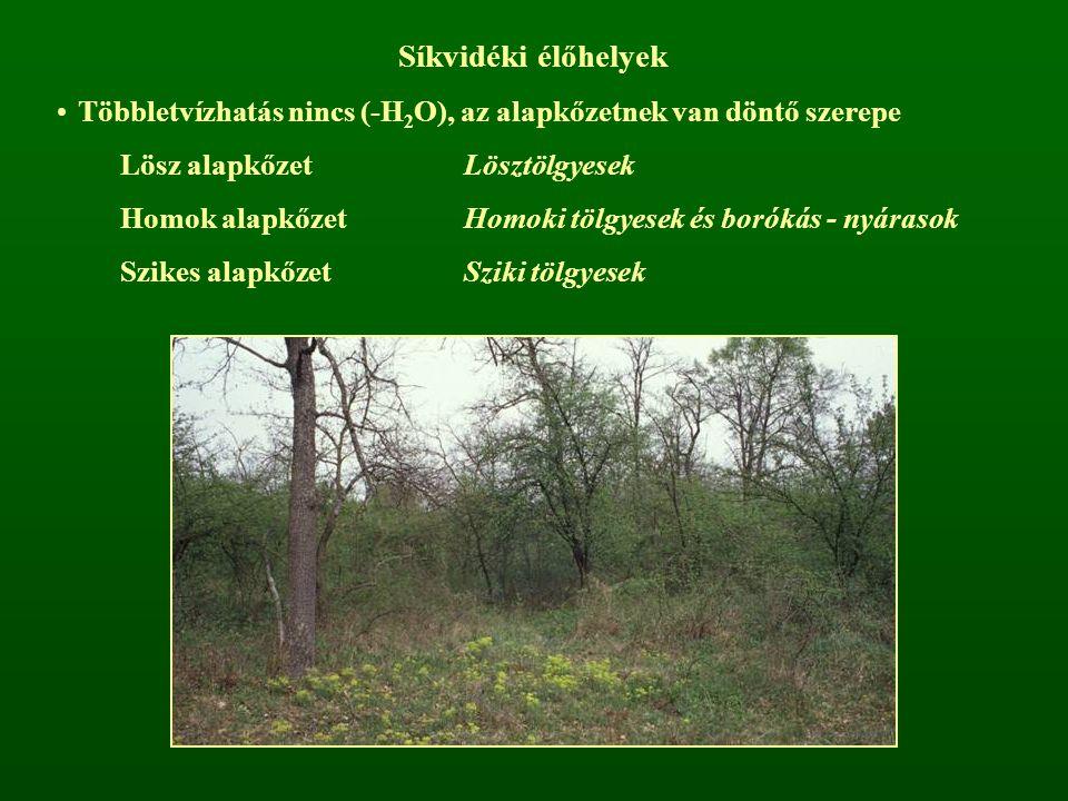 Síkvidéki élőhelyek Többletvízhatás nincs (-H2O), az alapkőzetnek van döntő szerepe. Lösz alapkőzet Lösztölgyesek.