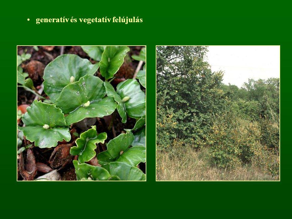 generatív és vegetatív felújulás