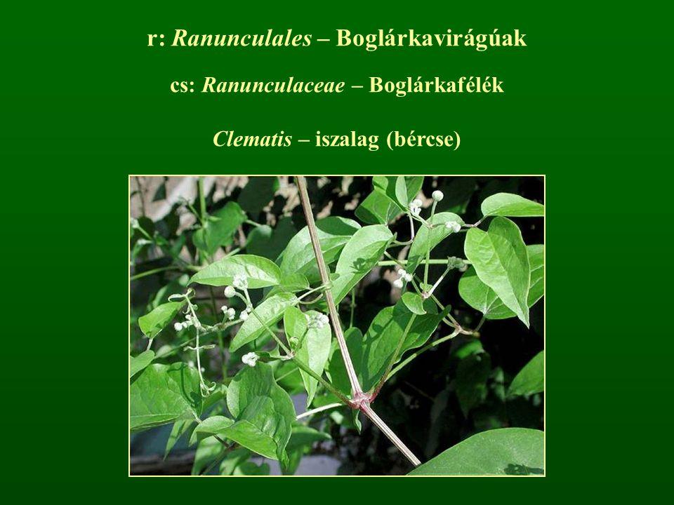 r: Ranunculales – Boglárkavirágúak