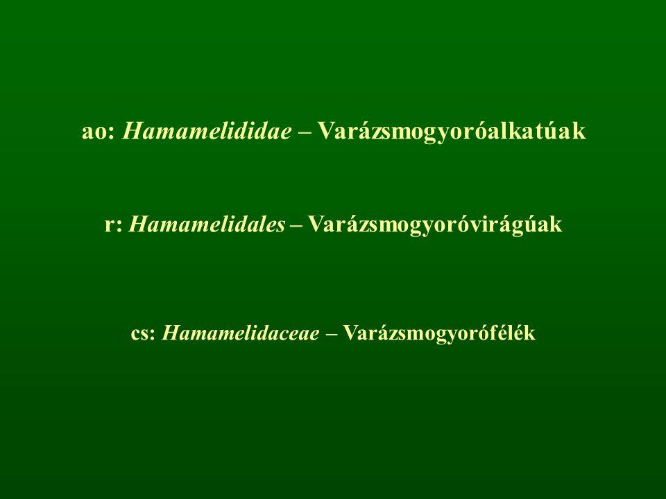ao: Hamamelididae – Varázsmogyoróalkatúak