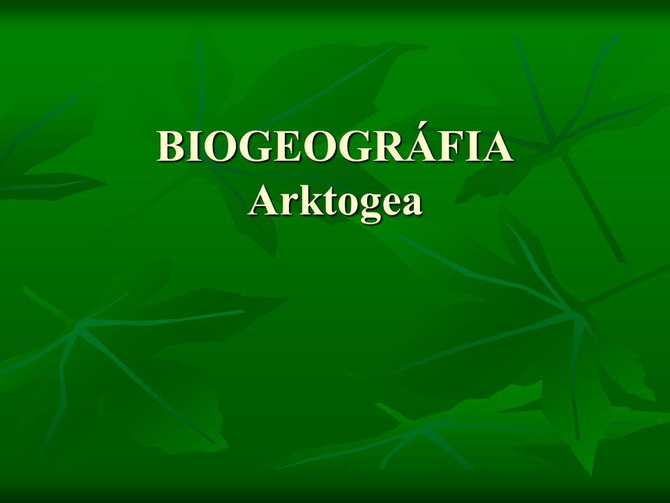 BIOGEOGRÁFIA Arktogea