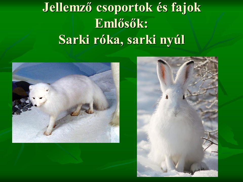 Jellemző csoportok és fajok Emlősők: Sarki róka, sarki nyúl