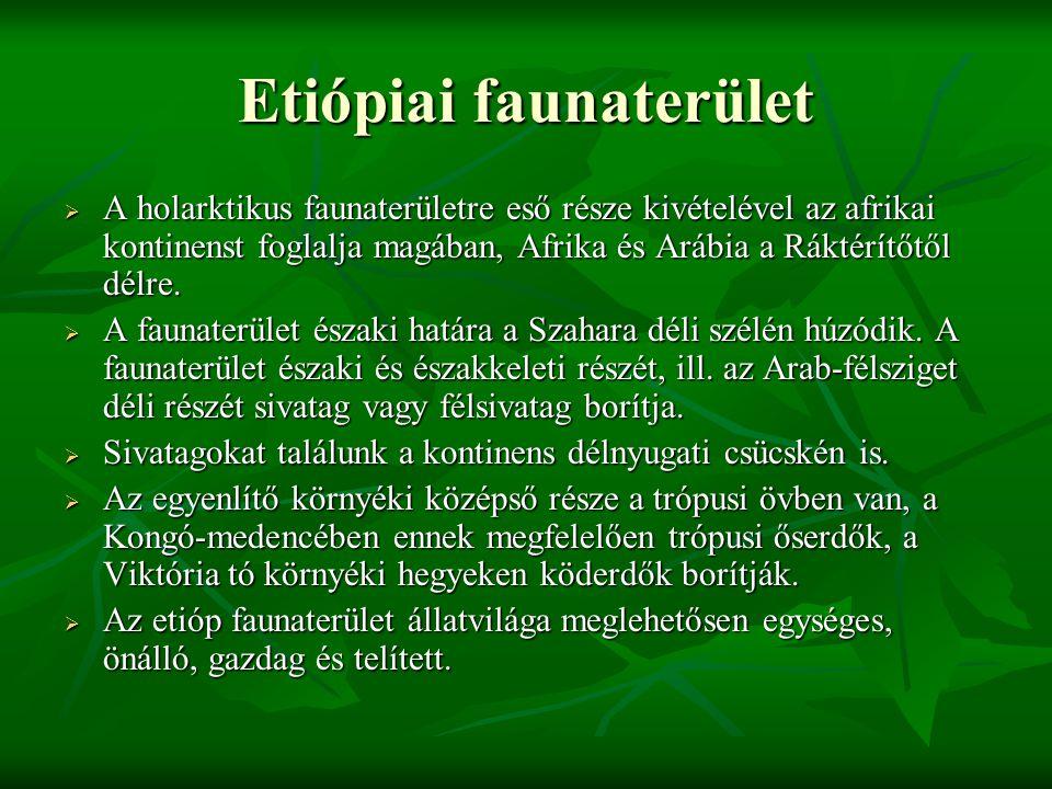 Etiópiai faunaterület