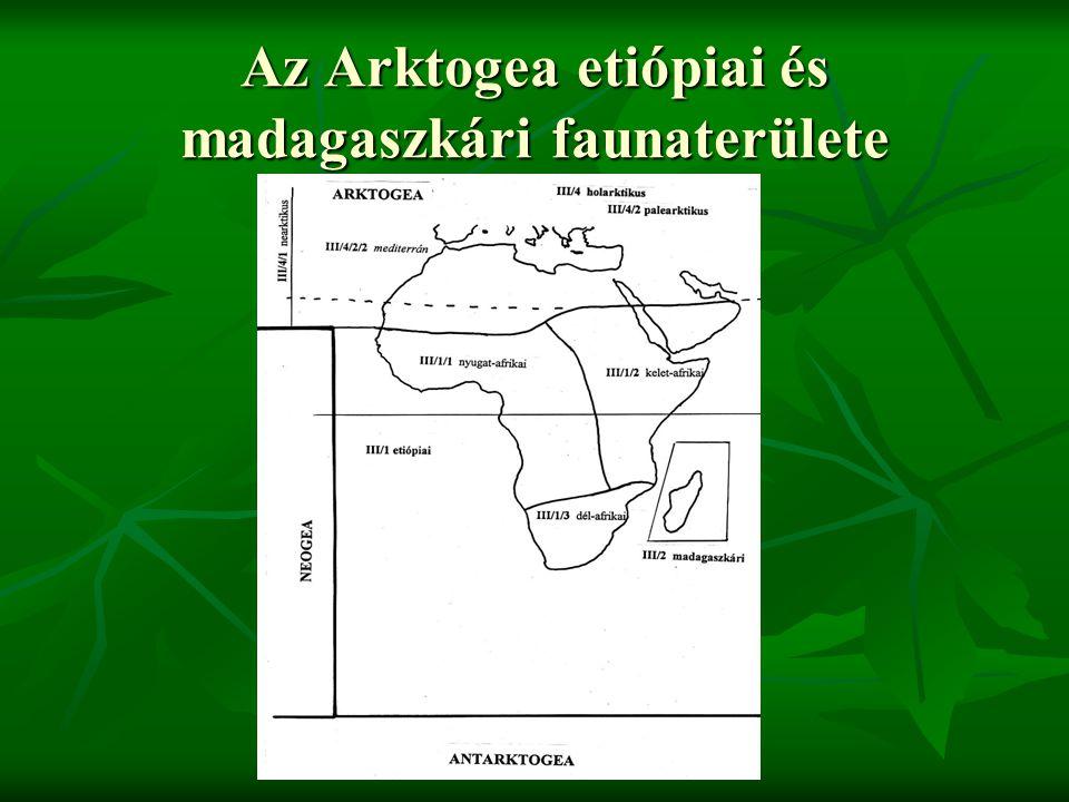 Az Arktogea etiópiai és madagaszkári faunaterülete