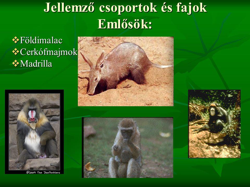 Jellemző csoportok és fajok Emlősök: