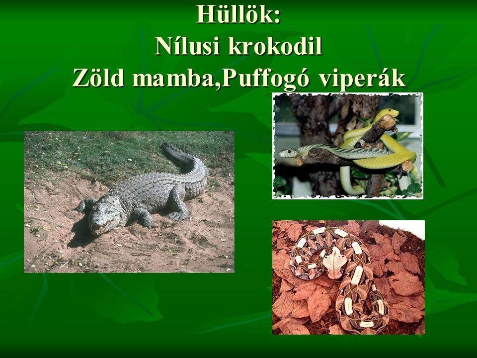 Hüllök: Nílusi krokodil Zöld mamba,Puffogó viperák